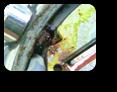 【時計修理】クォーツ式腕時計修理9---セイコールキア7T32Bクォーツ腕時計修理 ボタン不良 見た目以上の不良具合修理【times-machine.com】《 時計修理 》【三田時計メガネ店@栃木県大田原市前田】