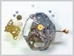 クォーツ式腕時計修理---シチズンフォルマ4634Mクォーツ腕時計 輪列部をはずした状態【times-machine.com】《 時計修理 》【三田時計メガネ店@栃木県大田原市前田】